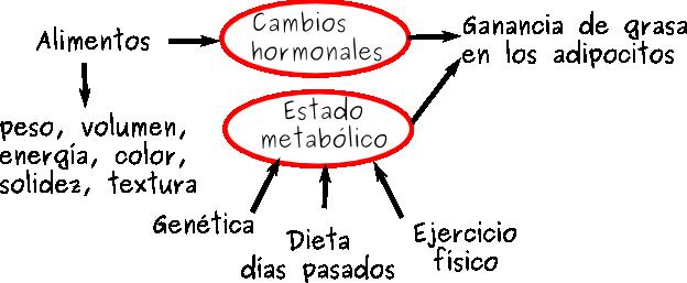 hormonas